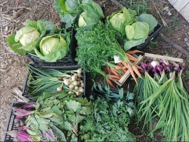 Warzywa Ekologiczne marchew, buraczki, Por, ziemniaki, Pietruszka