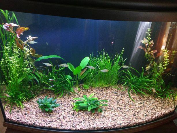 Продам аквариум с крышкой, фильтром,обогревателем, корягой и наполните
