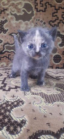 Отдам маленькую кошечку в добрые руки)))