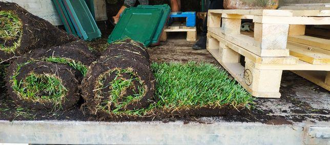 Рулонний газон від виробника. Трава в рулонах