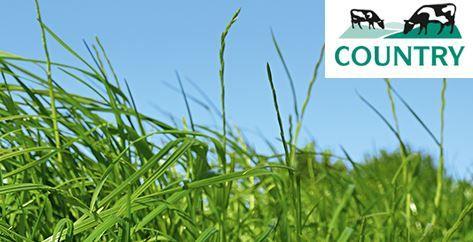 Nasiona traw DSV Country 2015 na gleby organiczne