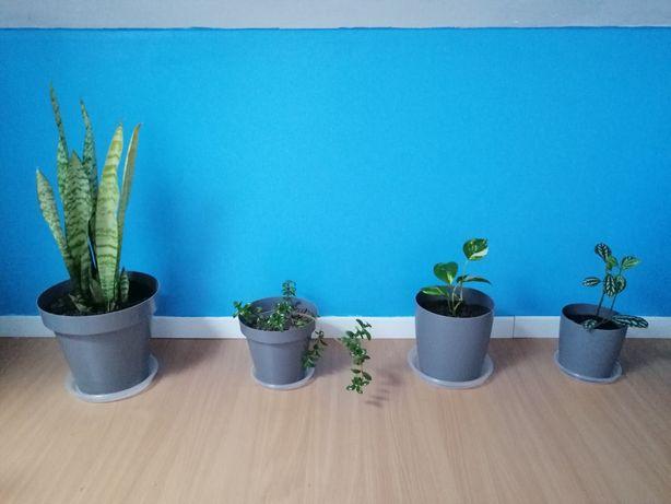 Conjunto de 4 plantas