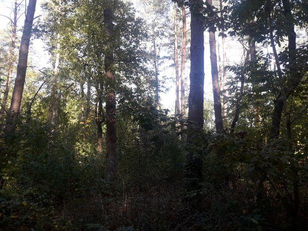 Las z gruntem,działka w pobliżu jeziora, rzeki, niedaleko morza