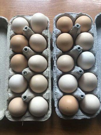 Swojskie Jajka z dowozem do domu