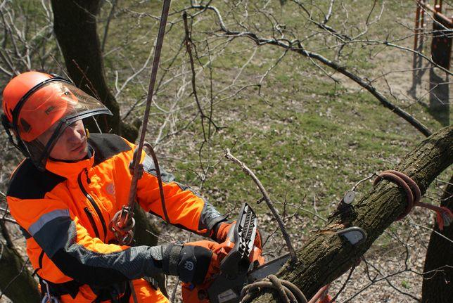 wycinka i pielęgnacja drzew również trudno usytuowanych