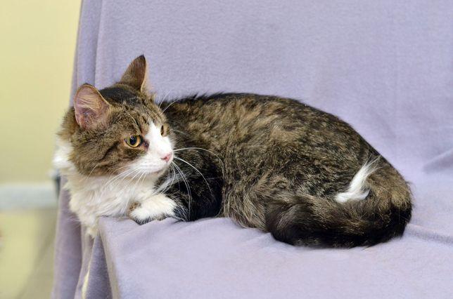 Котик Оскар ищет дом! 10 месяцев (кот, кошка)