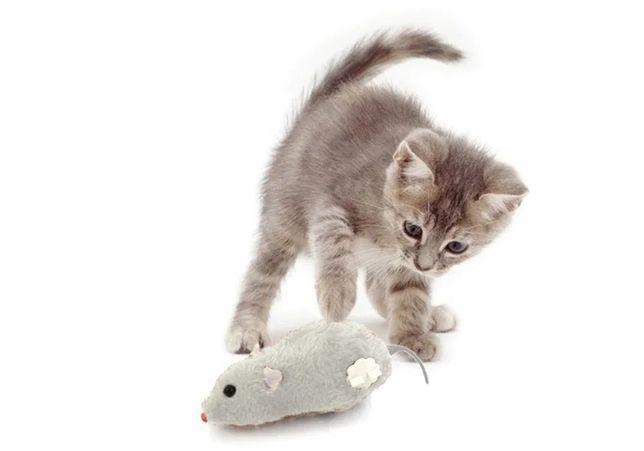 Pegadinha de rato de corda para gato delirar de loucura