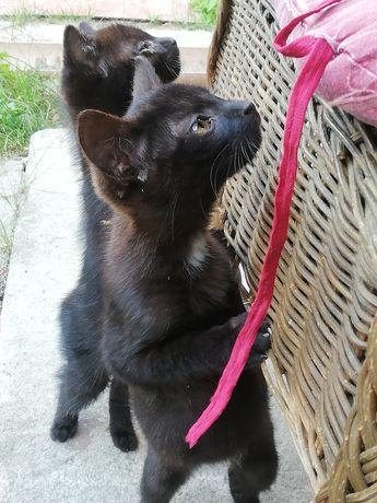 Kotki 3 m-czne oddam w opiekę