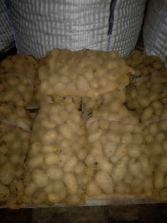 Ziemniaki jadalne po 15 kg, odpadowe, paszowe 10 gr