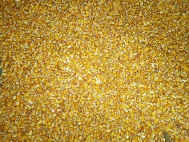 Кукуруза ,урожай 2020