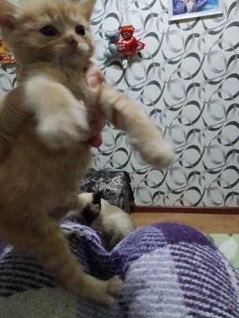 Отдам бесплатно персикового котенка , кушает сам и на лоток ходит сам.