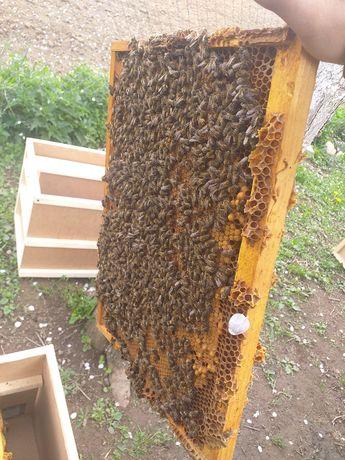 Пчелопакеты (Карпатка)