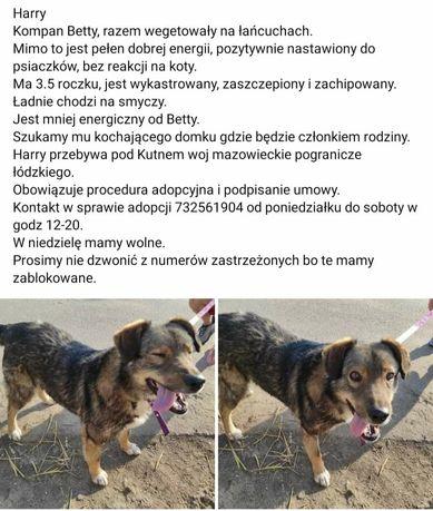 Średni pies oddam do adopcji za darmo