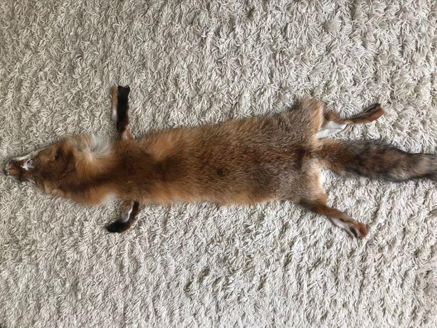 Шкурка лисы цельная