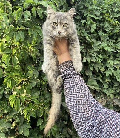 Котенок отдам в хорошие руки