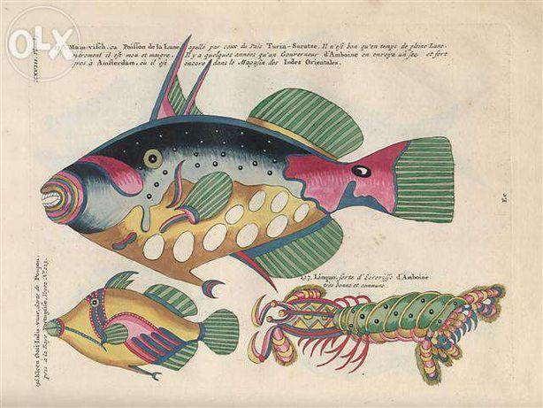 RYBY 1754 r. - ZWIERZĘTA Wodne - reprint XVIII w. grafiki - 30x20 cm