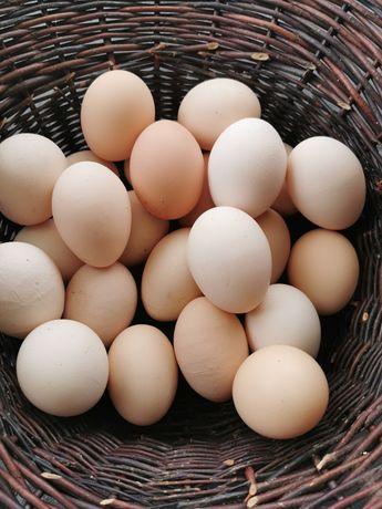 Świeże wiejskie jaja