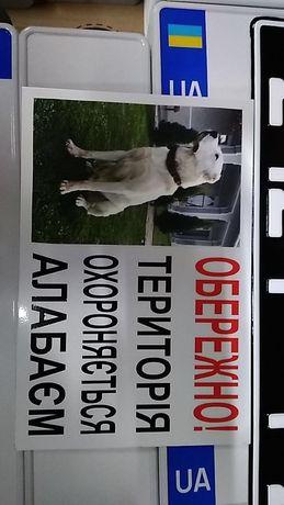 Табличка для собаки