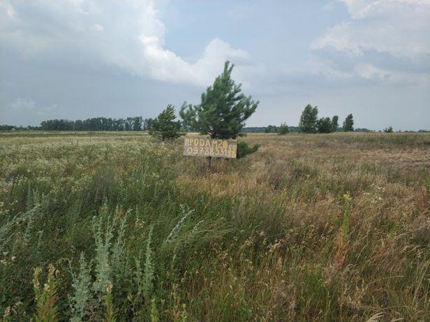 Пирново участок 20сот возле р Десны