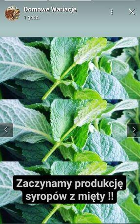 Syrop z mięty ogrodowej lemoniada