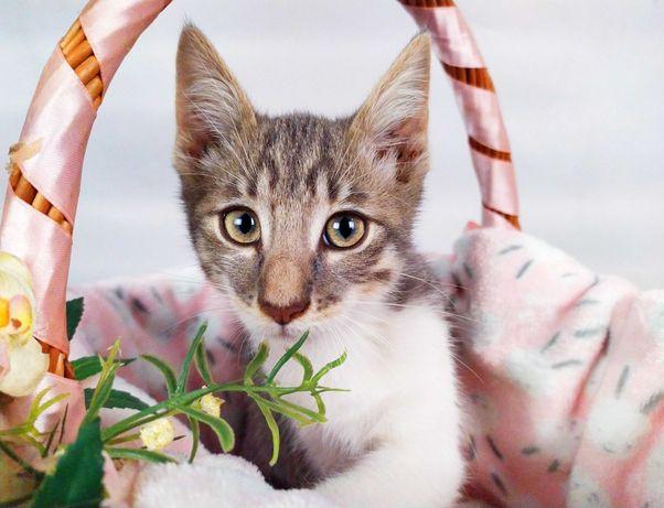 Пухнасте кошеня Джері в добрі руки 2,5 міс. Кіт в пошуках сім'ї