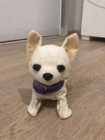 Интерактивная игрушка Chi Chi Love Чихуахуа Флиппи