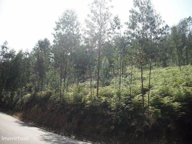 Área total aprox: 5920m2, com eucaliptos Óptimos acessos.