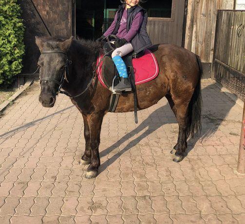 Jazdy na kucyku oprowadzanki w teren dla dzieci konik konie nauka