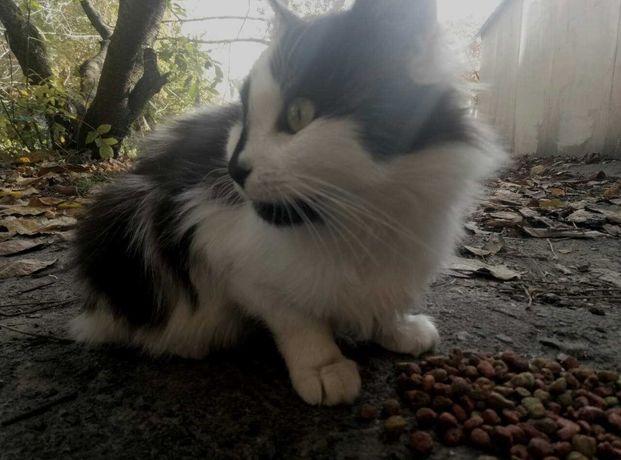 Черно-белая Инь Янь)) кошечка ищет теплый дом и любящих хозяев