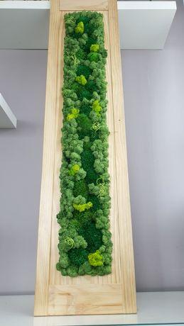 Obraz z mchu, chrobotek, zielona ściana, poduszkowy obraz z chrobotka