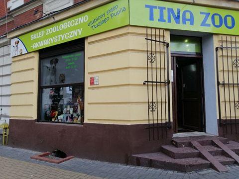 Świnka Morska Skinny (łysa) Tina Zoo Gliwice Witkiewicza