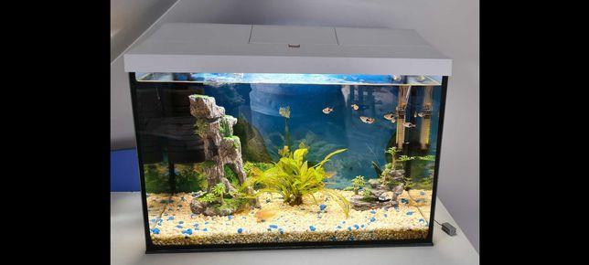 Akwarium biale  / Aqueal day night 60 zestaw akwarium Led