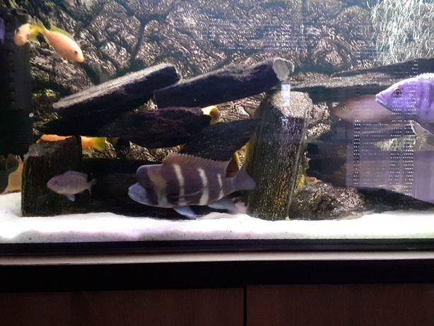 Akwarium z rybami OKAZJA