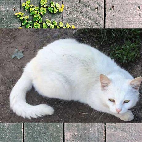 Белая полоса в вашей жизни - кошка Снежка, 3 года.