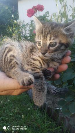 Кошеня в хороші руки