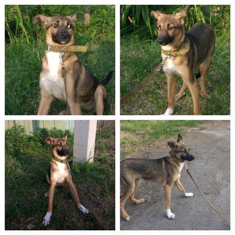 Бесплатно: собачка щенок Дашка, 6,5 мес, стерилизована