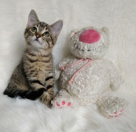 Малышка Рыська 2.5 мес.