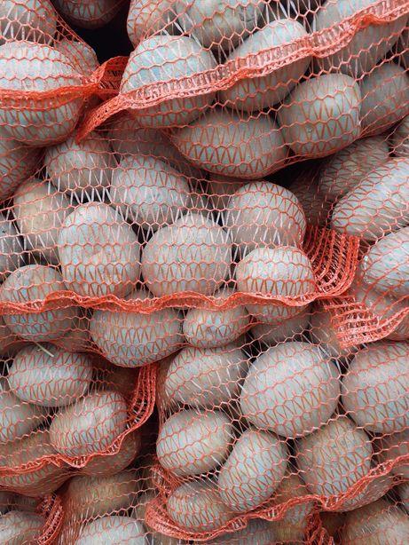 Ziemniaki jadalne Vineta