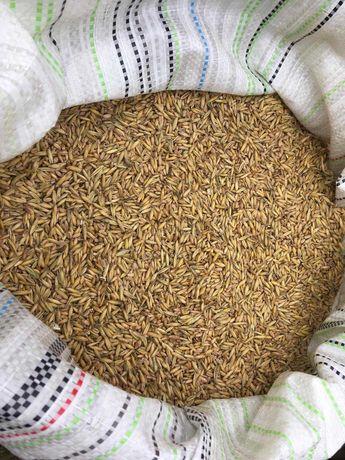 Sprzedam zboże: Mieszanka owies+pszenica