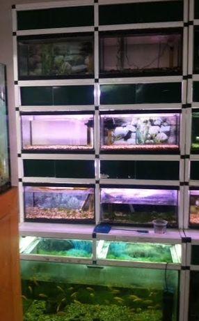 bateria de aquarios