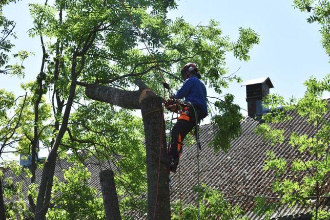 Wycinka drzew, koszenie trawników, cięcie żywopłotów, glebogryzarka