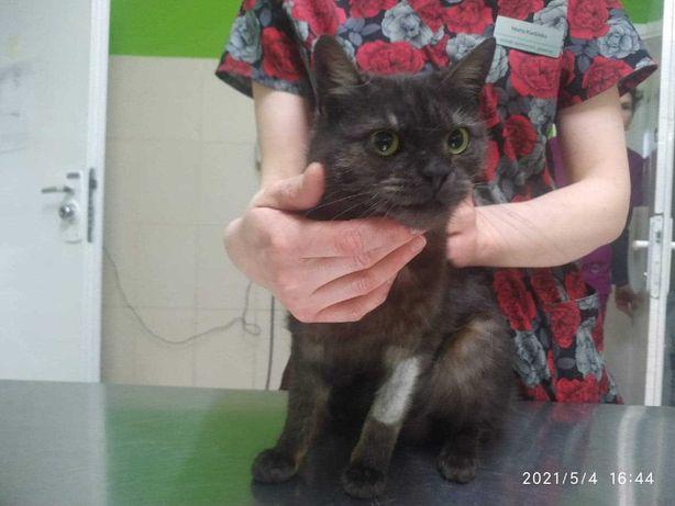 Uratuj Tosię - spokojna kotka szuka domu - Włocławek/cała Polska