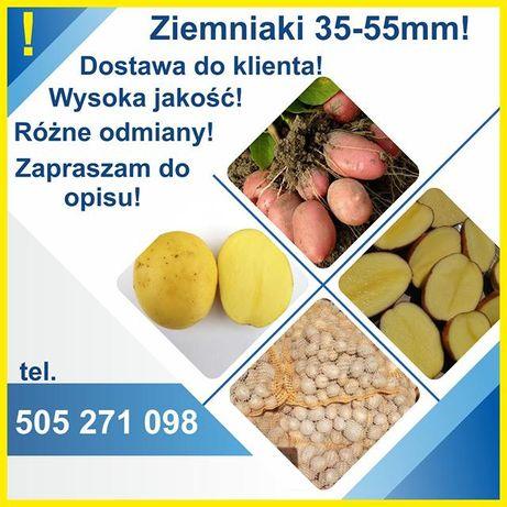Ziemniaki sadzeniaki Lord Denar Bellarosa Labella Michalina Jurek jell