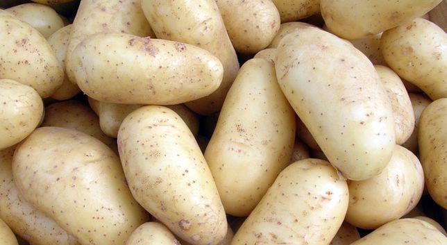 Ziemniaki irys vineta catania i Ricarda