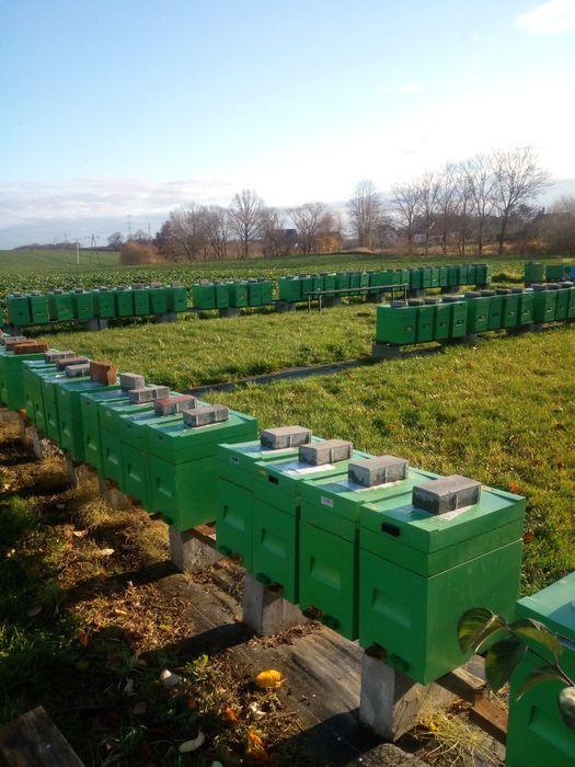 Odkłady pszczele przezimowane kwiecień 2021 r. Smętowo Graniczne - image 1
