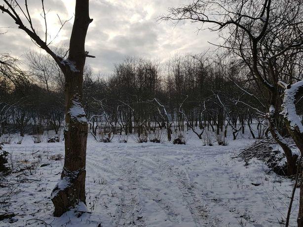 Drzewo / Drewno  - Orzech włoski / fornir, meble - 11 szt.