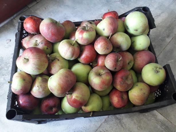 Jabłka spadowe z własnego sadu