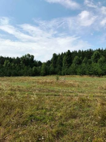 Продается 4 Га земли в окружении леса у Десны. БЕЗ КОМИССИИ