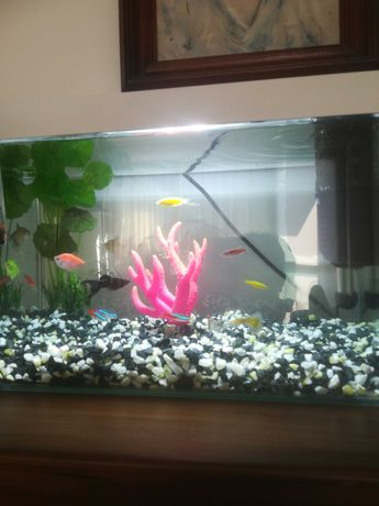 Akwarium z całym wyposażeniem
