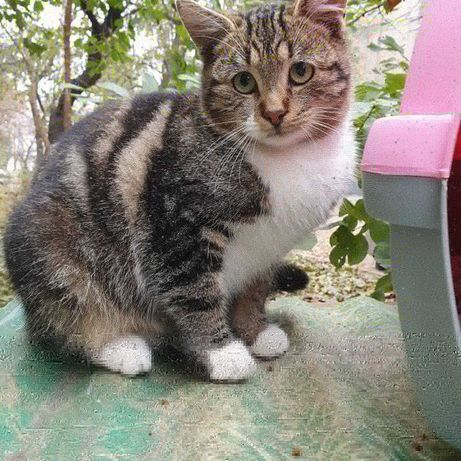 Молодой котик Пашка ищет дом котята